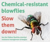 Help maintain the effectiveness of flystrike preventative chemicals!