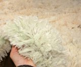 Fleece rot predisposes sheep to body strike