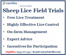 Participants wanted for lice treatment trial