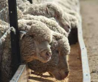 WormTest sheep going into drought-lots