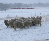 Winter-can sheep and goats be affected by worms in winter?