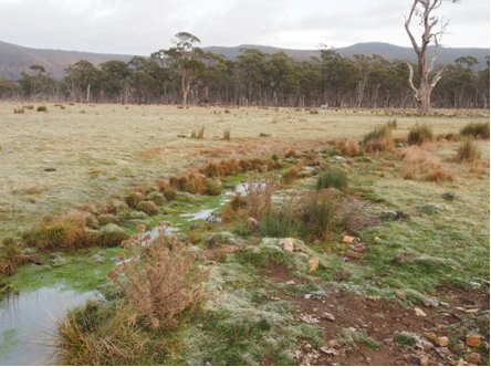 Tasmania worms, flies and lice update - May 2018