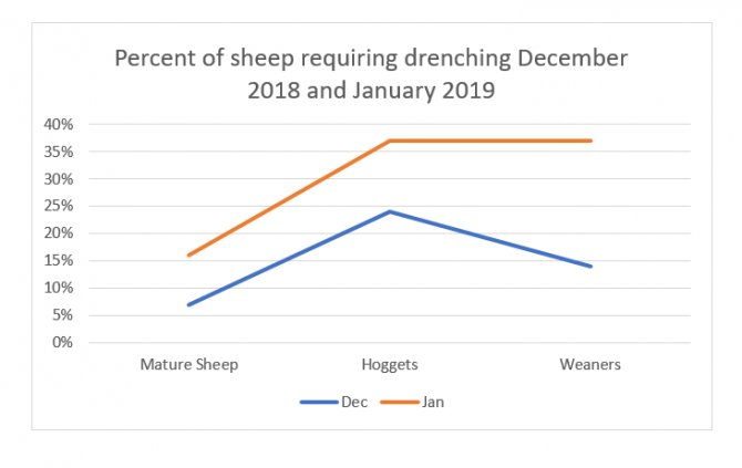 The graph shows the increased number of classes of stock particularly weaners requiring drenching this month, January 2019, compared to those in December 2018.