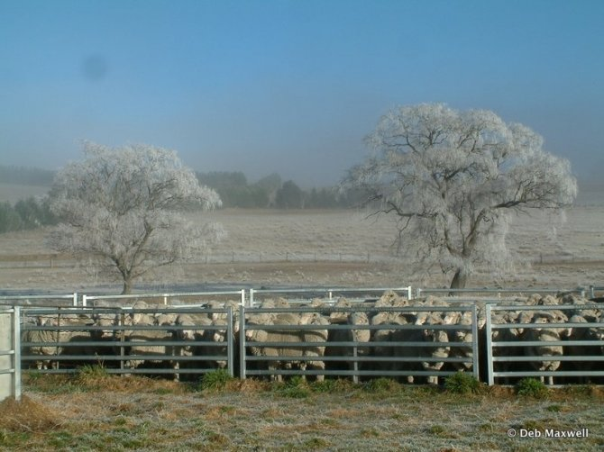 Frosty June morning